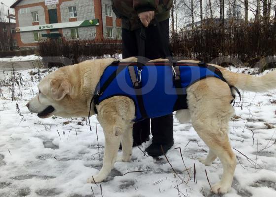 Корсет-поддержка для крупных собак